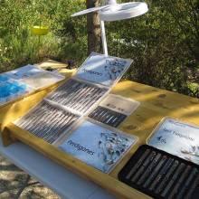 La grosse loupe permettant d'inspecter les mouches